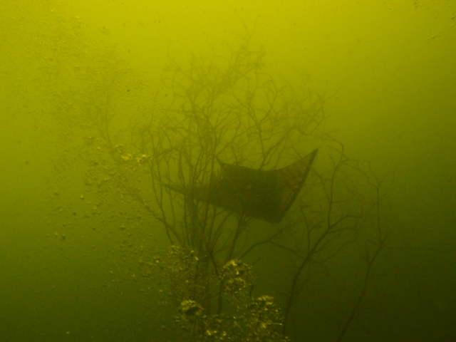 unterwasserfotos_3_20141106_1055220793.jpg